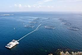 مزرعه پرورش ماهی سالمون